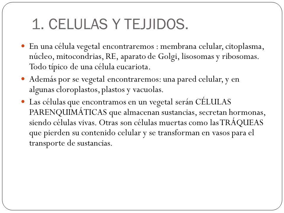 1.CELULAS Y TEJJIDOS.