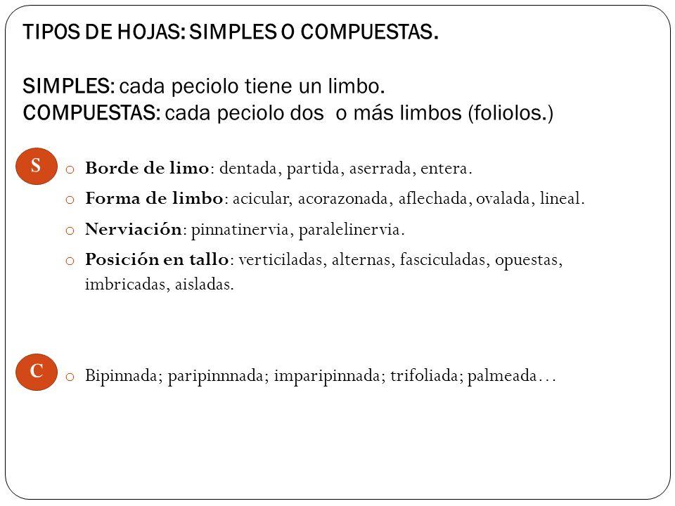 TIPOS DE HOJAS: SIMPLES O COMPUESTAS.SIMPLES: cada peciolo tiene un limbo.
