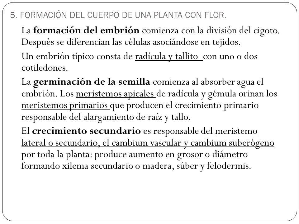 5.FORMACIÓN DEL CUERPO DE UNA PLANTA CON FLOR.