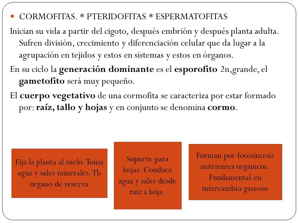 CORMOFITAS.