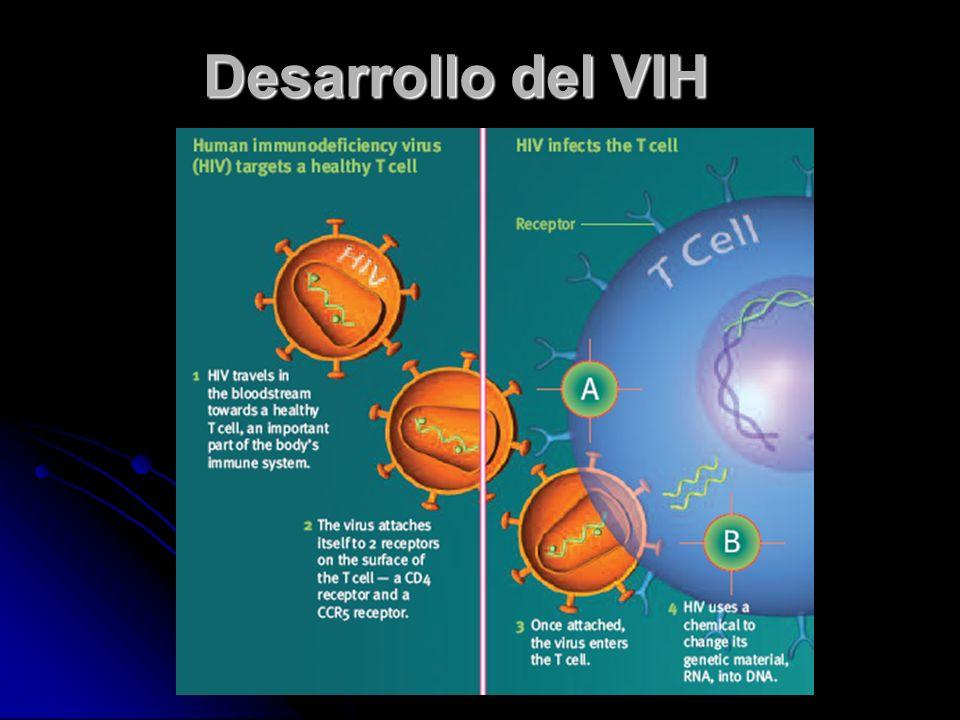 ¿Cómo se desarrolla el VIH en el cuerpo? El VIH entra en el organismo e infecta las células CD4 (células que componen el sistema inmunológico) y se mu