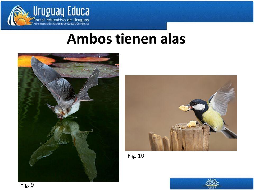 Ambos tienen alas Fig. 9 Fig. 10