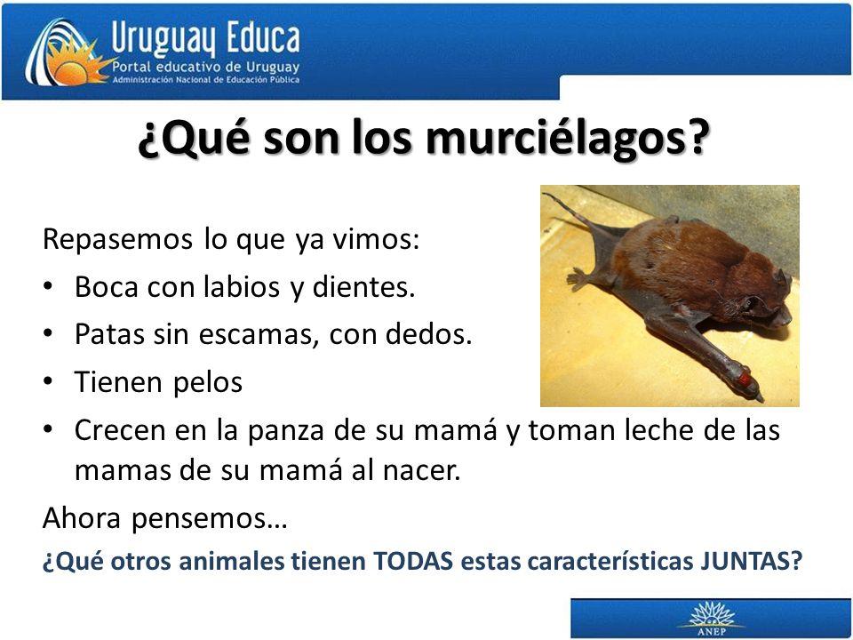 ¿Qué son los murciélagos? Repasemos lo que ya vimos: Boca con labios y dientes. Patas sin escamas, con dedos. Tienen pelos Crecen en la panza de su ma