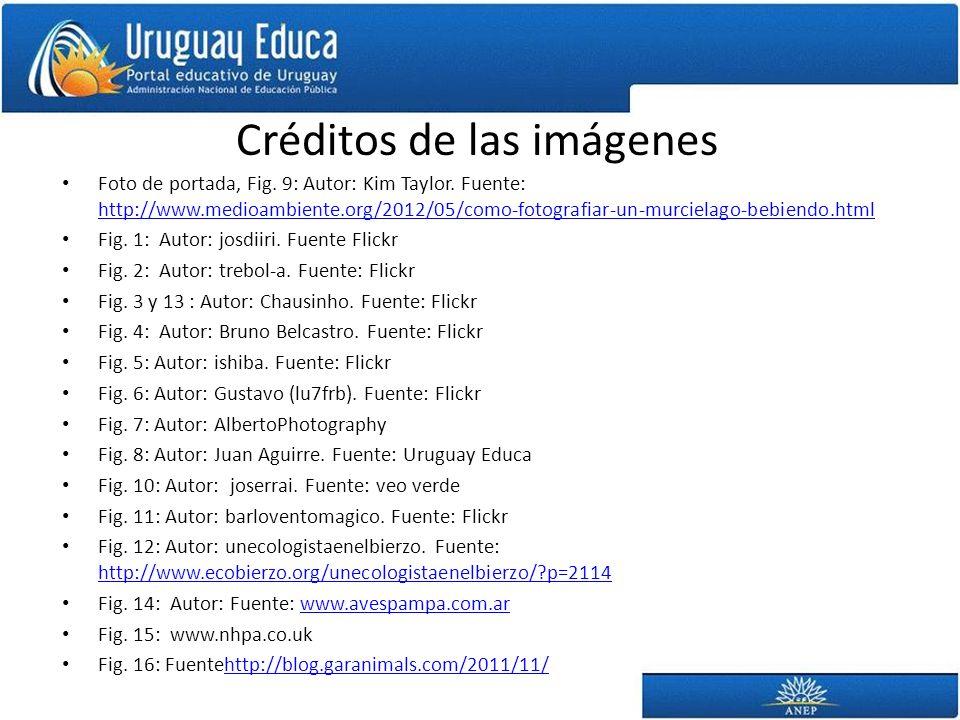 Créditos de las imágenes Foto de portada, Fig. 9: Autor: Kim Taylor. Fuente: http://www.medioambiente.org/2012/05/como-fotografiar-un-murcielago-bebie