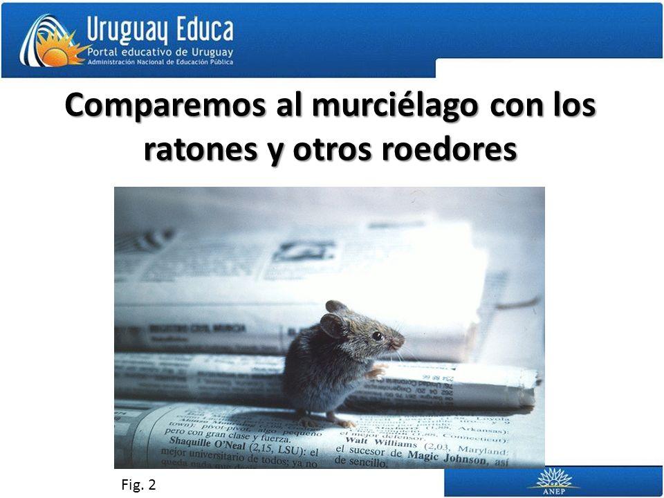 Comparemos al murciélago con los ratones y otros roedores Fig. 2