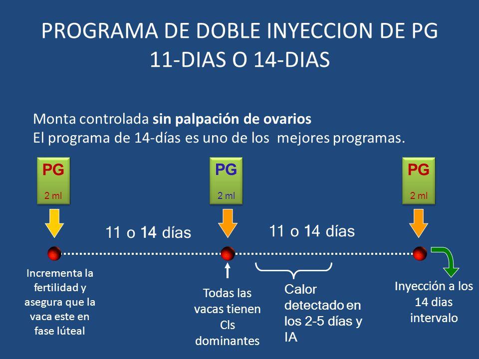 PROGRAMA DE DOBLE INYECCION DE PG 11-DIAS O 14-DIAS Todas las vacas tienen Cls dominantes PG 2 ml PG 2 ml 11 o 14 días Monta controlada sin palpación