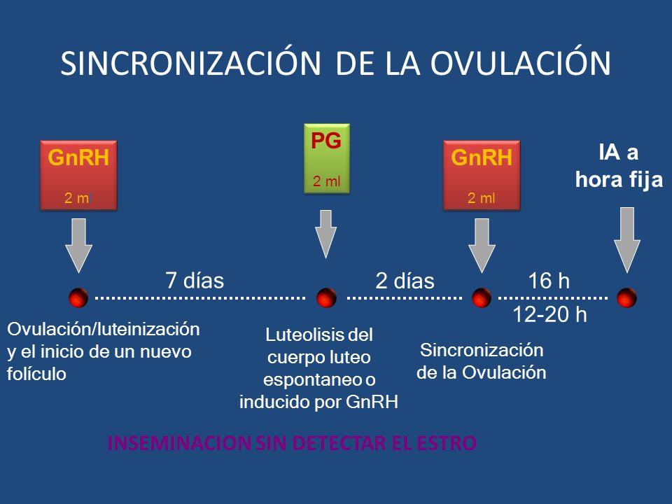 16 h GnRH 2 ml GnRH 2 ml GnRH 2 ml GnRH 2 ml 7 días PG 2 ml PG 2 ml Luteolisis del cuerpo luteo espontaneo o inducido por GnRH Ovulación/luteinización