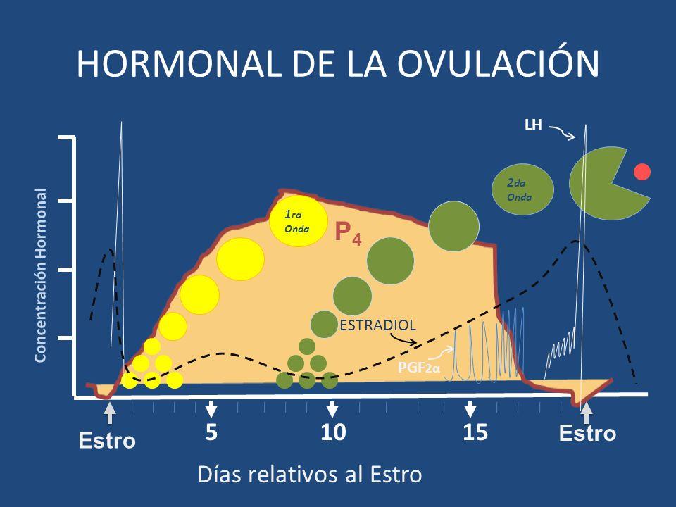 1510 Concentración Hormonal 5 Estro HORMONAL DE LA OVULACIÓN 1 ra Onda 2 da Onda P4P4 Días relativos al Estro Estro LH PGF 2α ESTRADIOL