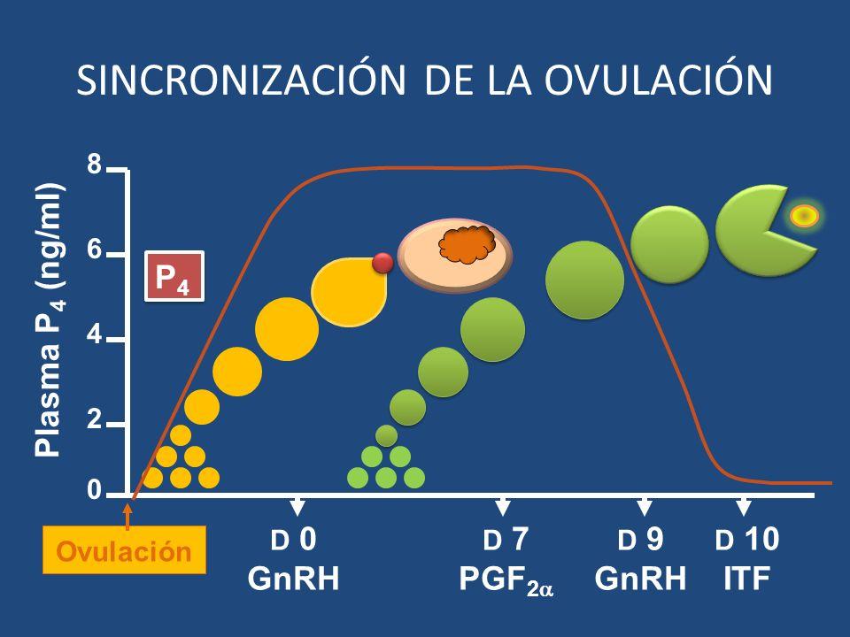 D 9 GnRH D 7 PGF 2 D 10 ITF 2 4 6 8 0 Plasma P 4 (ng/ml) P4P4 P4P4 D 0 GnRH Ovulación SINCRONIZACIÓN DE LA OVULACIÓN