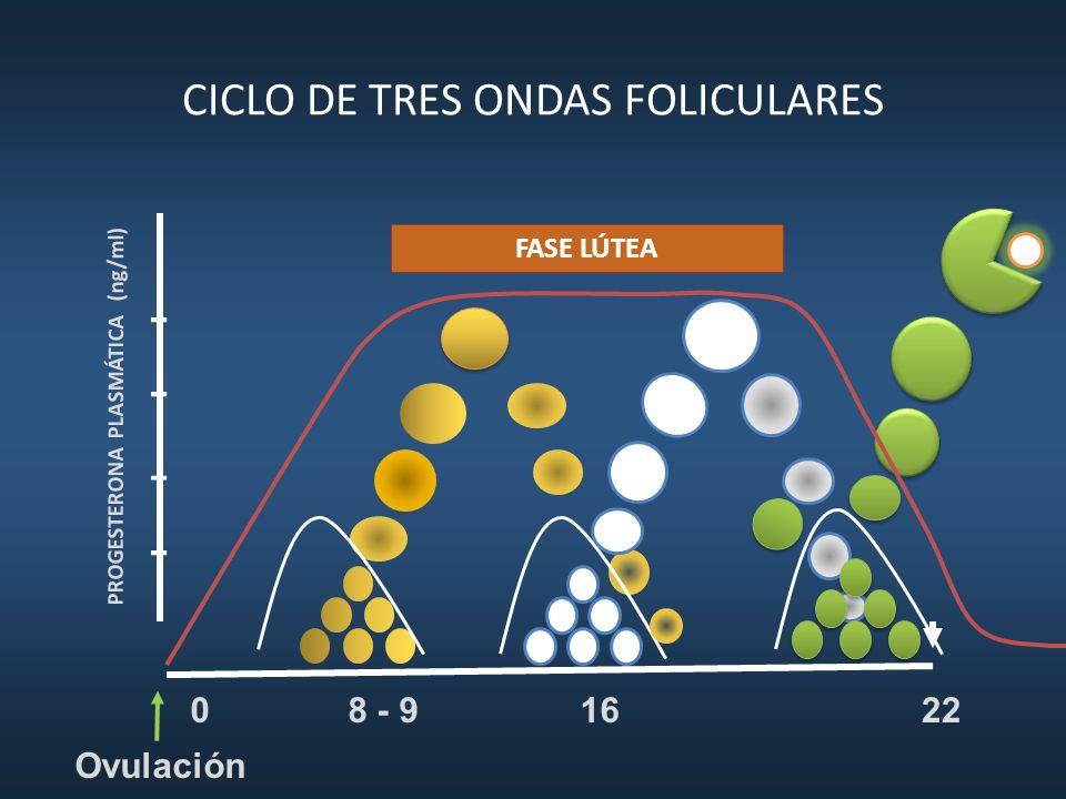 CICLO DE TRES ONDAS FOLICULARES 16 8 - 922 PROGESTERONA PLASMÁTICA (ng/ml) 0 Ovulación FASE LÚTEA