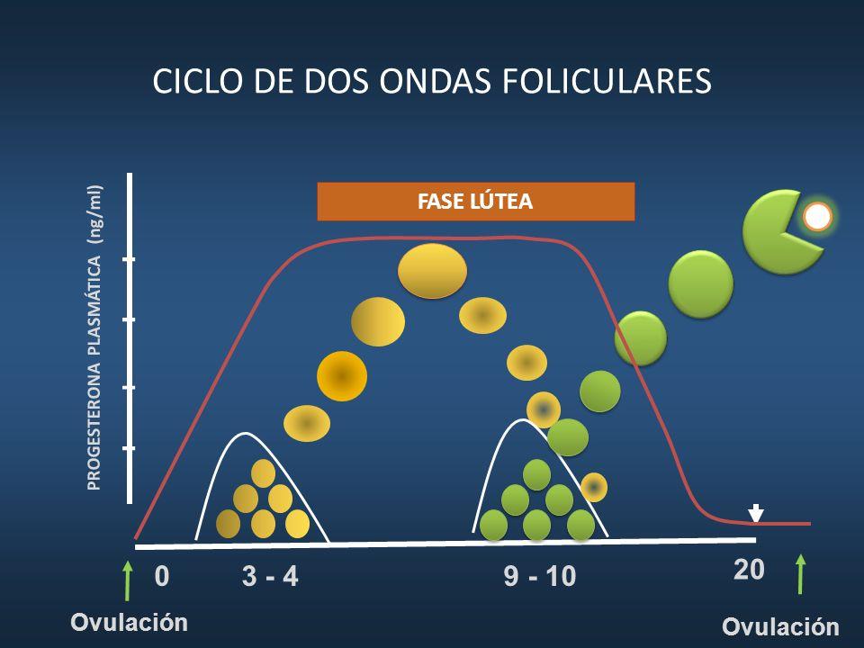 CICLO DE DOS ONDAS FOLICULARES 9 - 10 3 - 4 20 PROGESTERONA PLASMÁTICA (ng/ml) 0 Ovulación FASE LÚTEA Ovulación