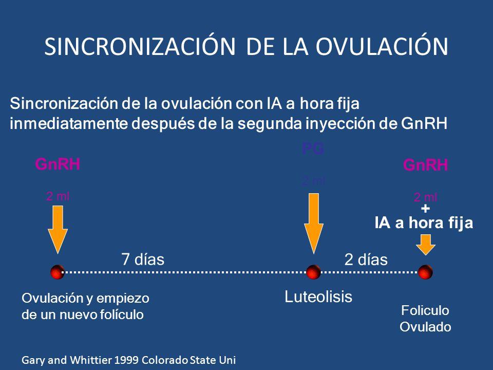 2 días GnRH 2 ml + IA a hora fija GnRH 2 ml 7 días PG 2 ml Luteolisis Ovulación y empiezo de un nuevo folículo Foliculo Ovulado SINCRONIZACIÓN DE LA O