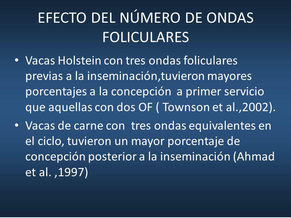 EFECTO DEL NÚMERO DE ONDAS FOLICULARES Vacas Holstein con tres ondas foliculares previas a la inseminación,tuvieron mayores porcentajes a la concepció