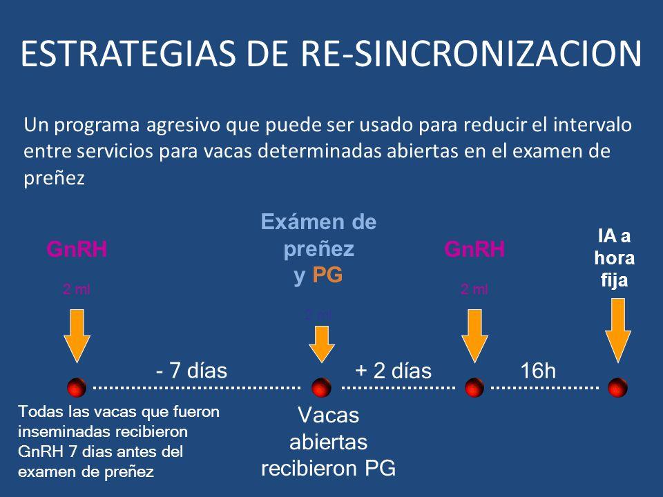 ESTRATEGIAS DE RE-SINCRONIZACION Un programa agresivo que puede ser usado para reducir el intervalo entre servicios para vacas determinadas abiertas e