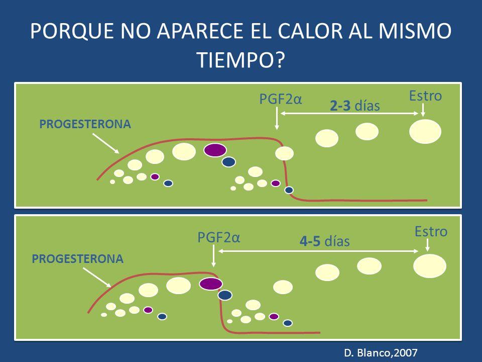 PORQUE NO APARECE EL CALOR AL MISMO TIEMPO? PROGESTERONA PGF2α 2-3 días Estro PROGESTERONA PGF2α 4-5 días Estro D. Blanco,2007