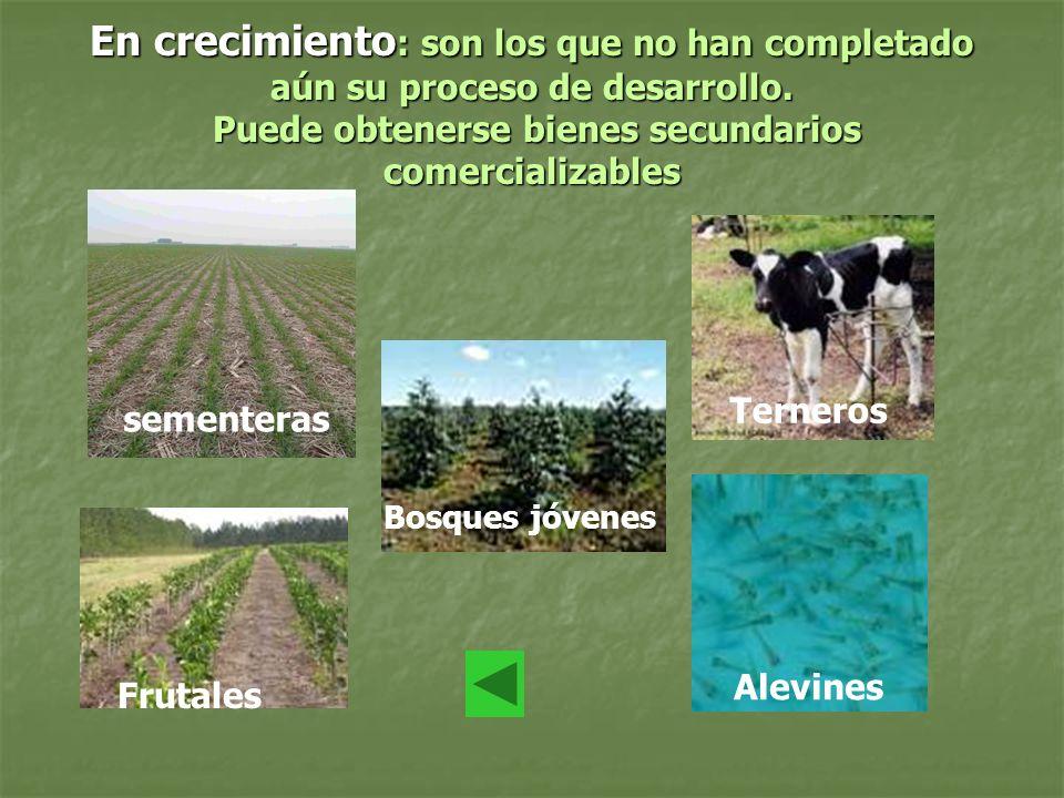En crecimiento : son los que no han completado aún su proceso de desarrollo. Puede obtenerse bienes secundarios comercializables sementeras Frutales B