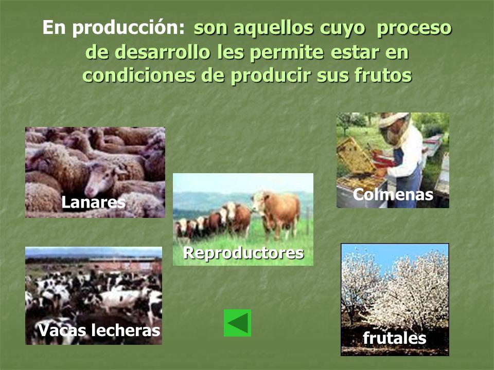 son aquellos cuyo proceso de desarrollo les permite estar en condiciones de producir sus frutos En producción: son aquellos cuyo proceso de desarrollo