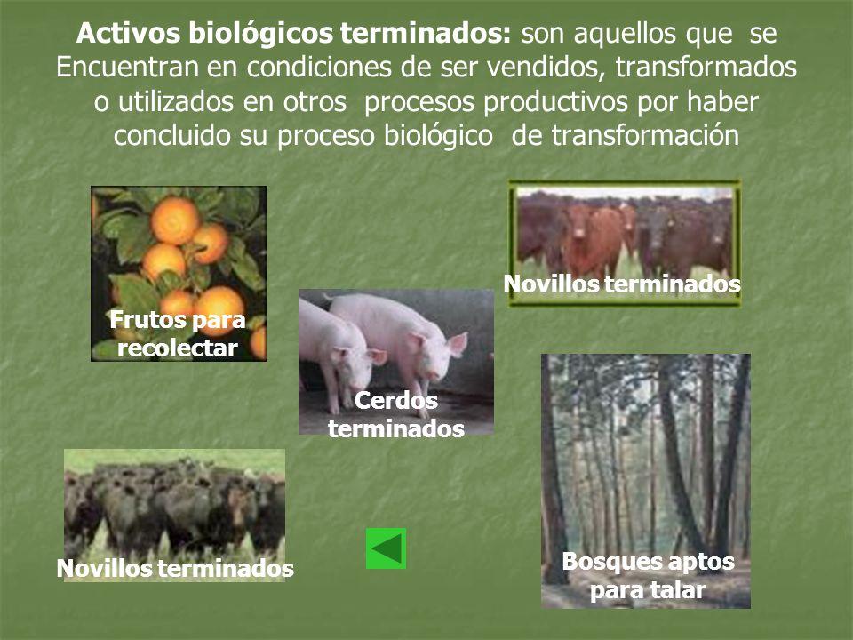 Activos biológicos terminados: son aquellos que se Encuentran en condiciones de ser vendidos, transformados o utilizados en otros procesos productivos