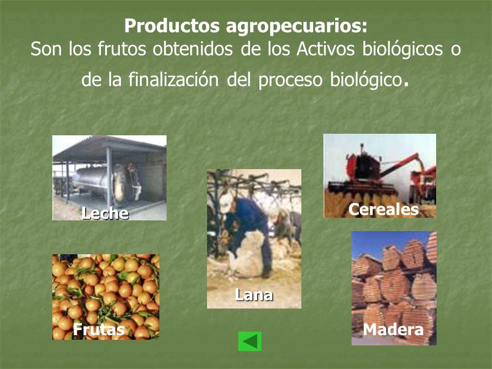 Productos agropecuarios: Son los frutos obtenidos de los Activos biológicos o de la finalización del proceso biológico. Leche Frutas Lana Cereales Mad