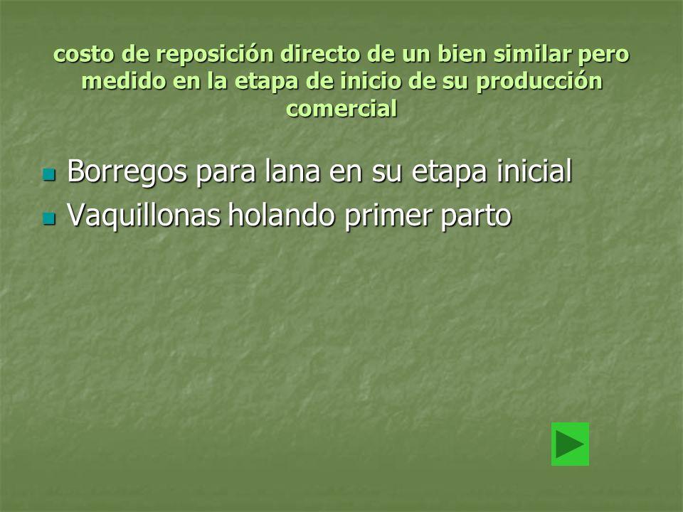 costo de reposición directo de un bien similar pero medido en la etapa de inicio de su producción comercial Borregos para lana en su etapa inicial Bor
