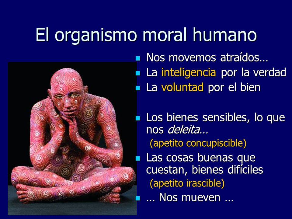 El organismo moral humano Inteligencia Inteligencia Voluntad Voluntad Apetito concupiscible (corazón, sentimientos, afectos, emociones) Apetito concupiscible (corazón, sentimientos, afectos, emociones) Apetito irascible Apetito irascible