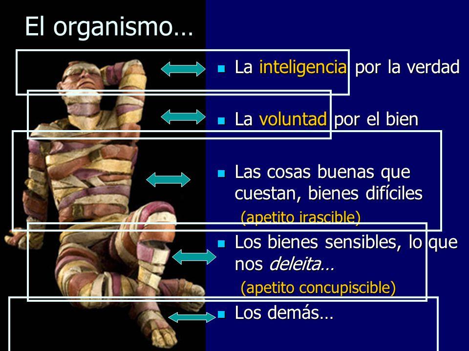 El organismo… Virtudes cardinales Corazón, Afectividad: => Esperanza Inteligencia => Fe Voluntad => Caridad Relación: Justicia v