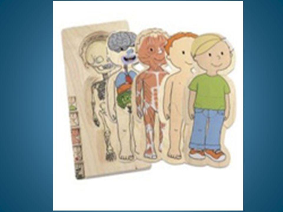 La Vida Familiar Estructura psicológica: Modelo La visión integral del desarrollo del niño-a nos obliga a considerar sus fundamentos fisiológicos-psic