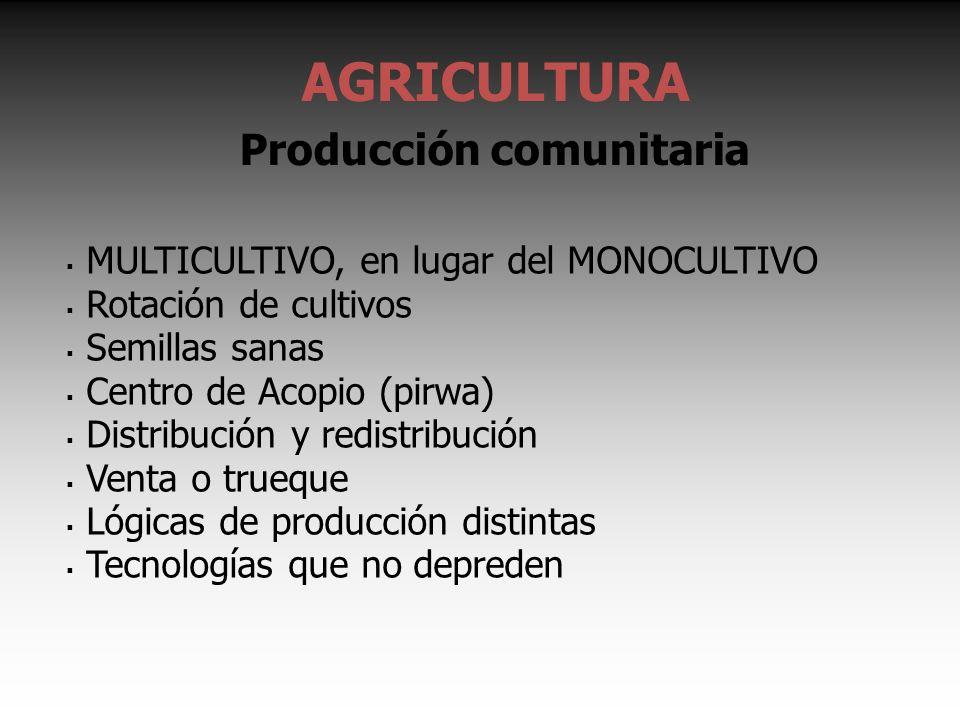 AGRICULTURA Producción comunitaria MULTICULTIVO, en lugar del MONOCULTIVO Rotación de cultivos Semillas sanas Centro de Acopio (pirwa) Distribución y redistribución Venta o trueque Lógicas de producción distintas Tecnologías que no depreden