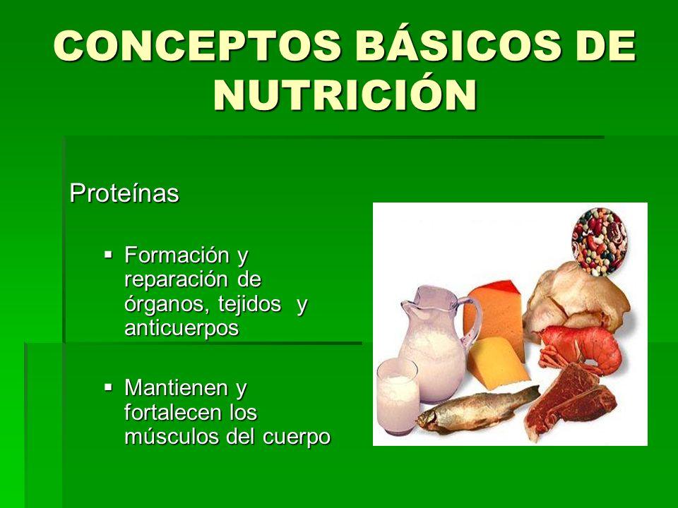 CONCEPTOS BÁSICOS DE NUTRICIÓN Proteínas Formación y reparación de órganos, tejidos y anticuerpos Formación y reparación de órganos, tejidos y anticue