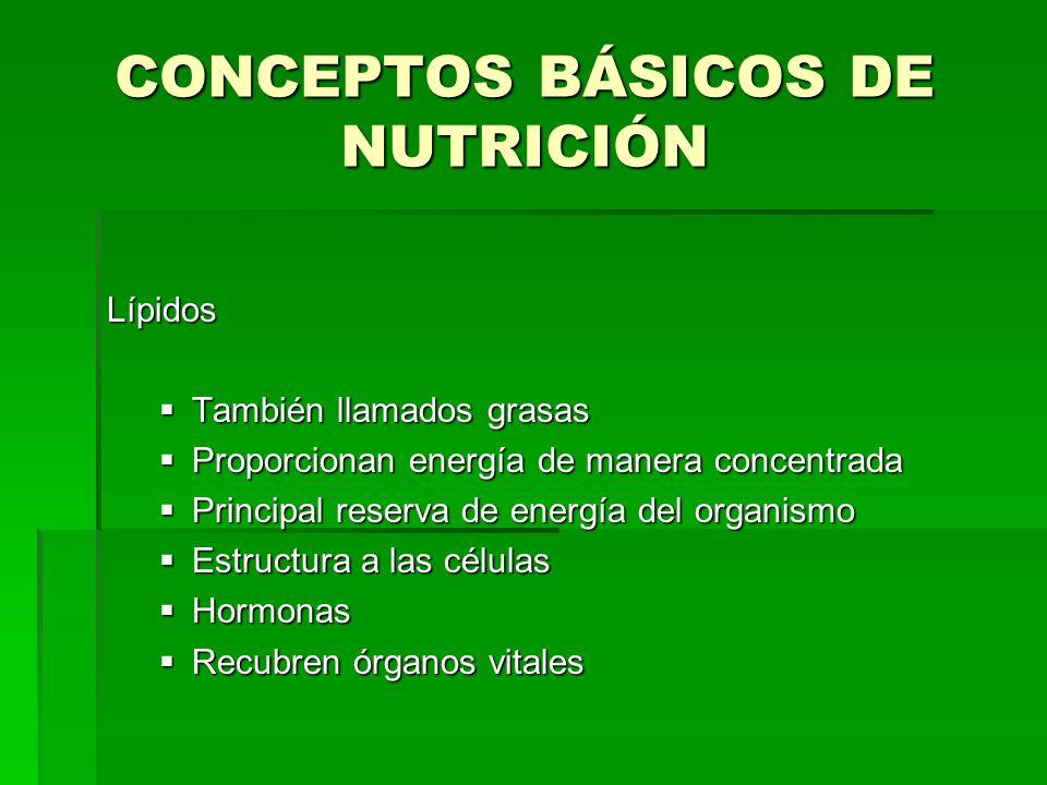 CONCEPTOS BÁSICOS DE NUTRICIÓN Lípidos También llamados grasas También llamados grasas Proporcionan energía de manera concentrada Proporcionan energía