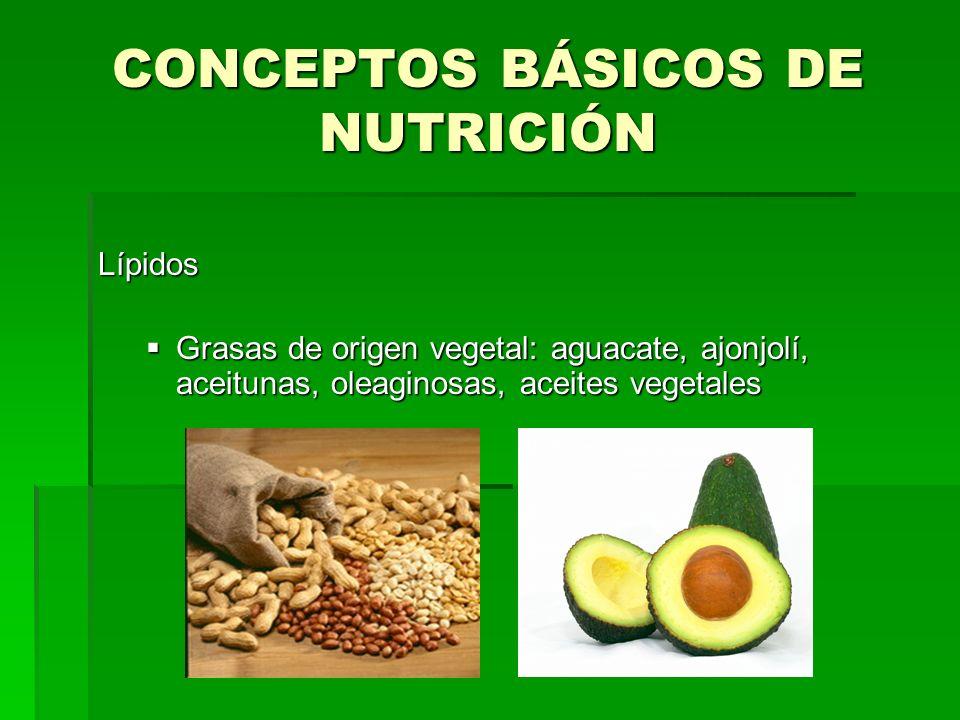 CONCEPTOS BÁSICOS DE NUTRICIÓN Lípidos Grasas de origen vegetal: aguacate, ajonjolí, aceitunas, oleaginosas, aceites vegetales Grasas de origen vegeta