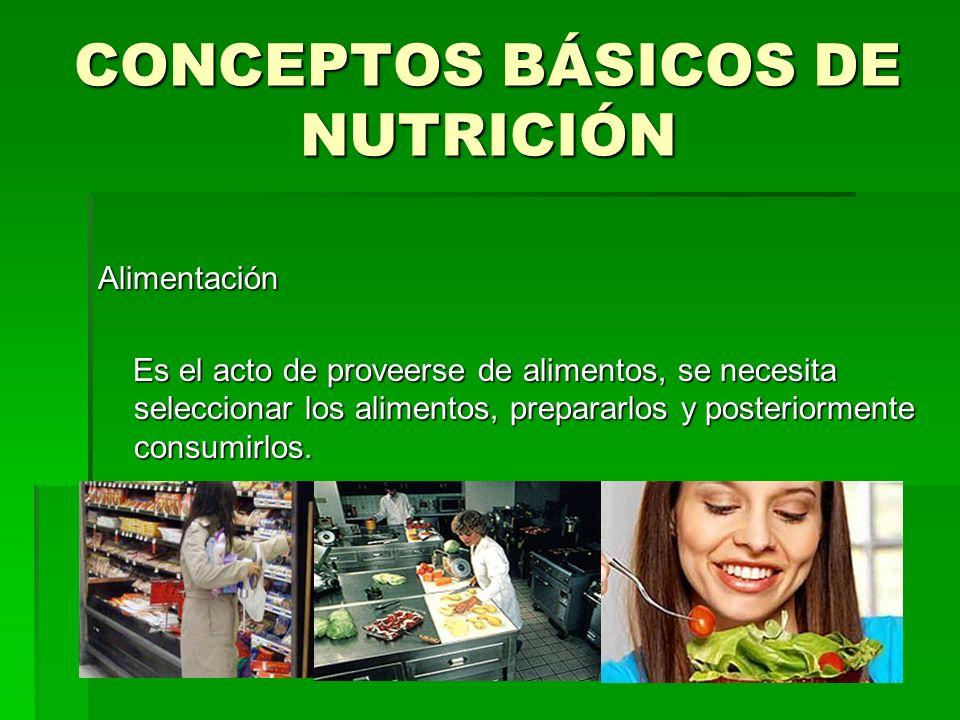 CONCEPTOS BÁSICOS DE NUTRICIÓN Alimentación Es el acto de proveerse de alimentos, se necesita seleccionar los alimentos, prepararlos y posteriormente