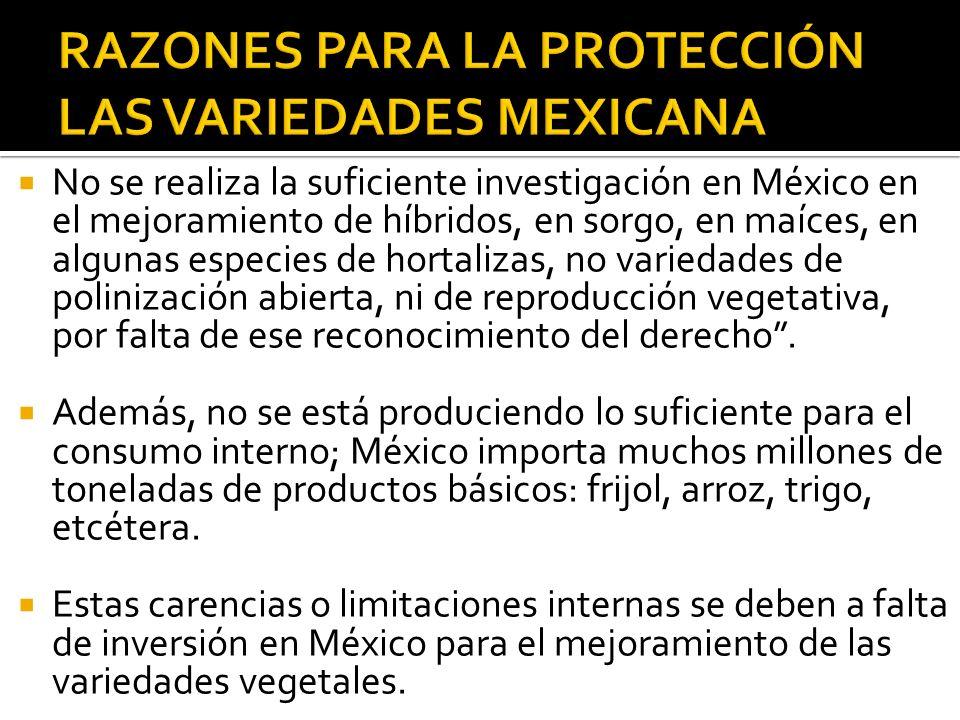 No se realiza la suficiente investigación en México en el mejoramiento de híbridos, en sorgo, en maíces, en algunas especies de hortalizas, no varieda