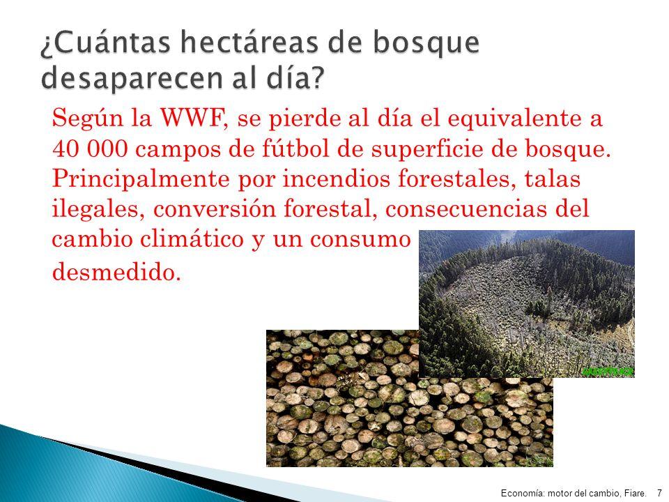 Según la WWF, se pierde al día el equivalente a 40 000 campos de fútbol de superficie de bosque. Principalmente por incendios forestales, talas ilegal