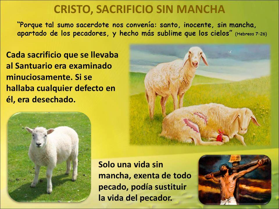 CRISTO, SACRIFICIO SIN MANCHA Porque tal sumo sacerdote nos convenía: santo, inocente, sin mancha, apartado de los pecadores, y hecho más sublime que los cielos (Hebreos 7:26) Cada sacrificio que se llevaba al Santuario era examinado minuciosamente.