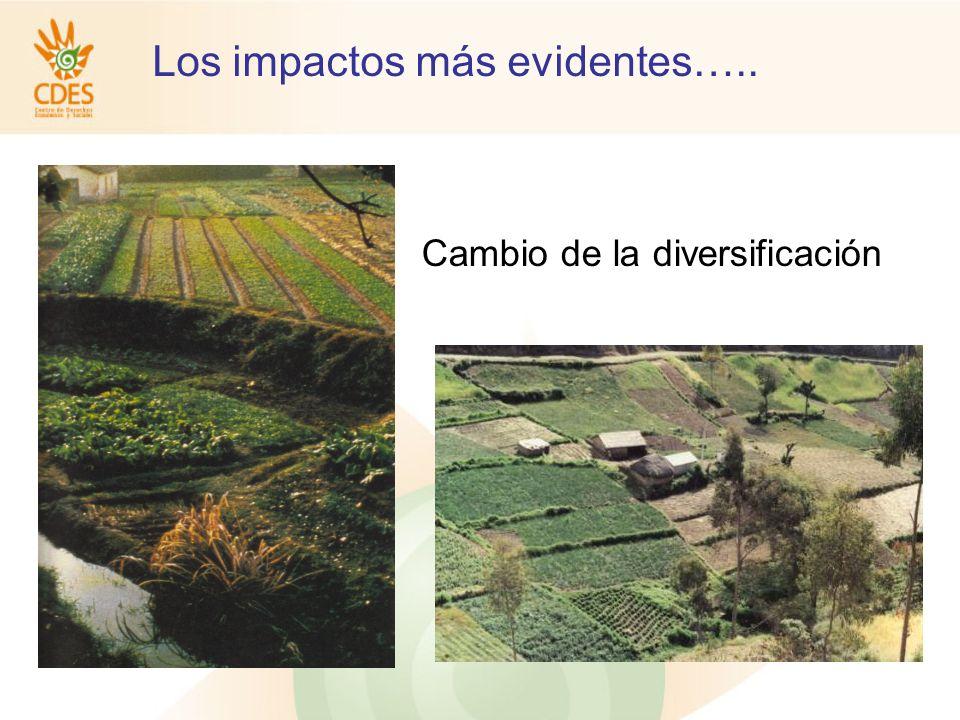 Los impactos más evidentes….. Cambio de la diversificación