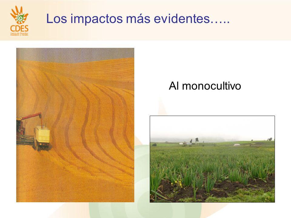 Los impactos más evidentes….. Al monocultivo