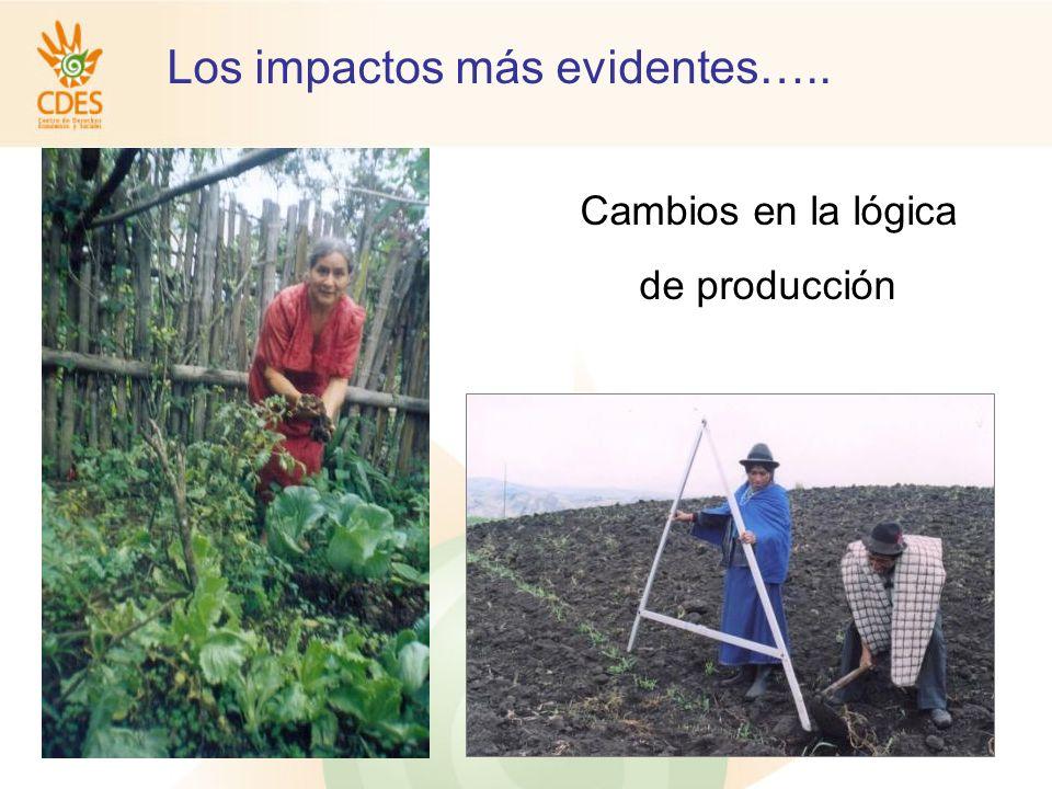 Los impactos más evidentes….. Cambios en la lógica de producción
