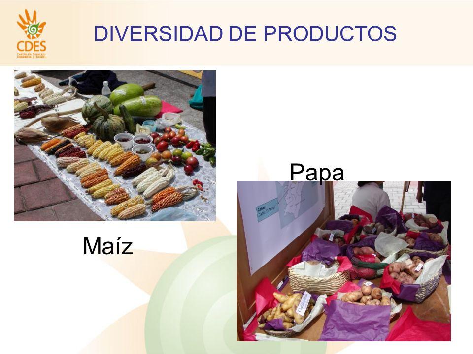 DIVERSIDAD DE PRODUCTOS Papa Maíz