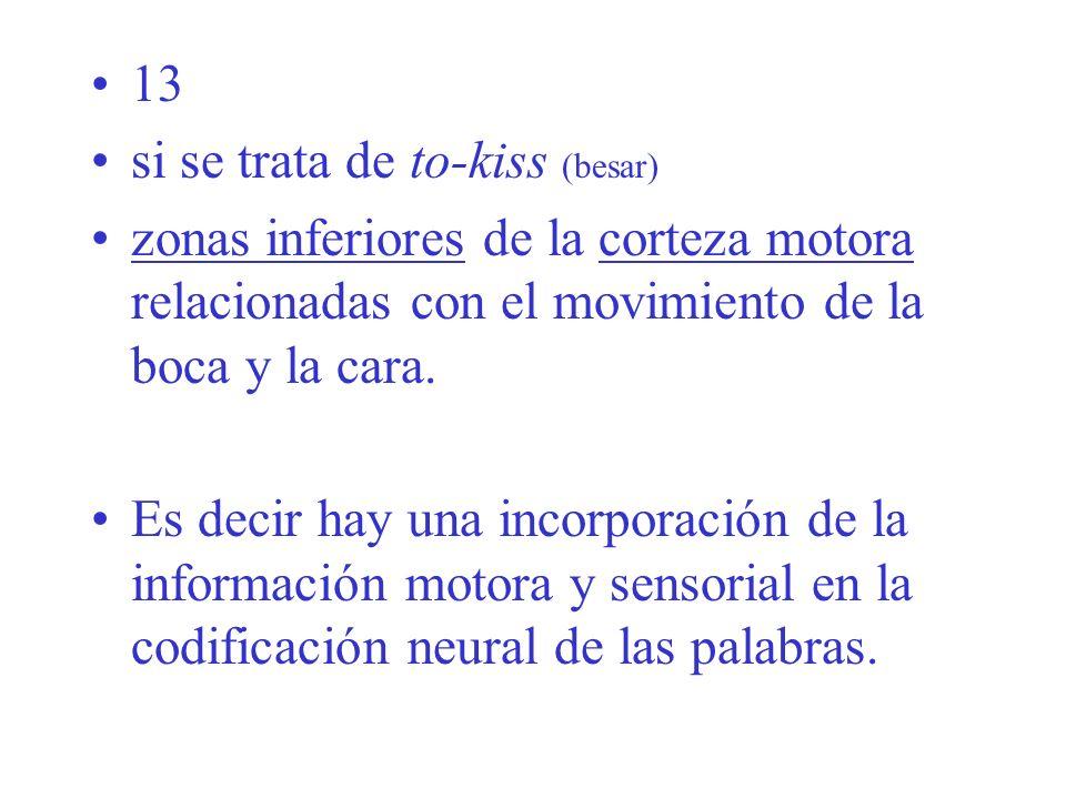 13 si se trata de to-kiss (besar) zonas inferiores de la corteza motora relacionadas con el movimiento de la boca y la cara.