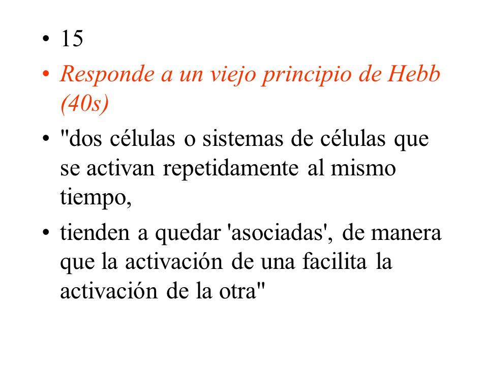 15 Responde a un viejo principio de Hebb (40s) dos células o sistemas de células que se activan repetidamente al mismo tiempo, tienden a quedar asociadas , de manera que la activación de una facilita la activación de la otra