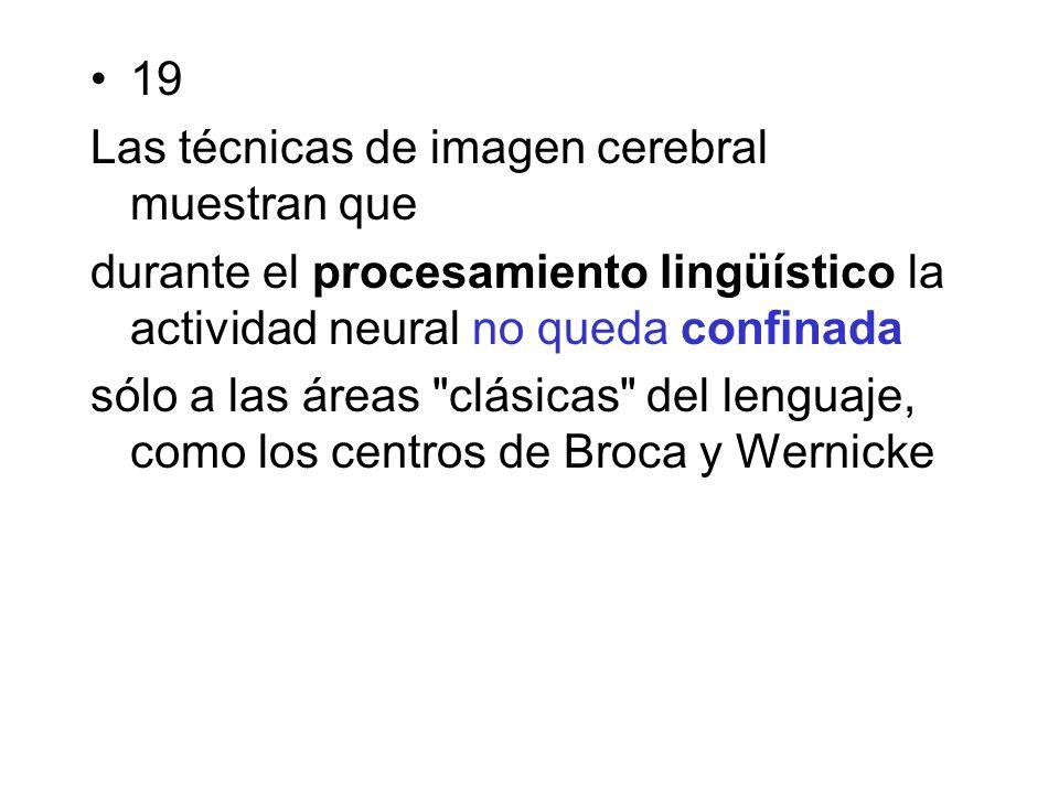 19 Las técnicas de imagen cerebral muestran que durante el procesamiento lingüístico la actividad neural no queda confinada sólo a las áreas clásicas del lenguaje, como los centros de Broca y Wernicke