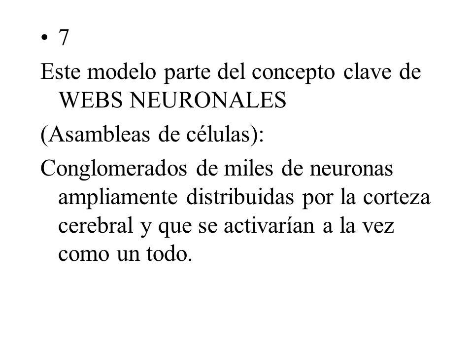 7 Este modelo parte del concepto clave de WEBS NEURONALES (Asambleas de células): Conglomerados de miles de neuronas ampliamente distribuidas por la corteza cerebral y que se activarían a la vez como un todo.