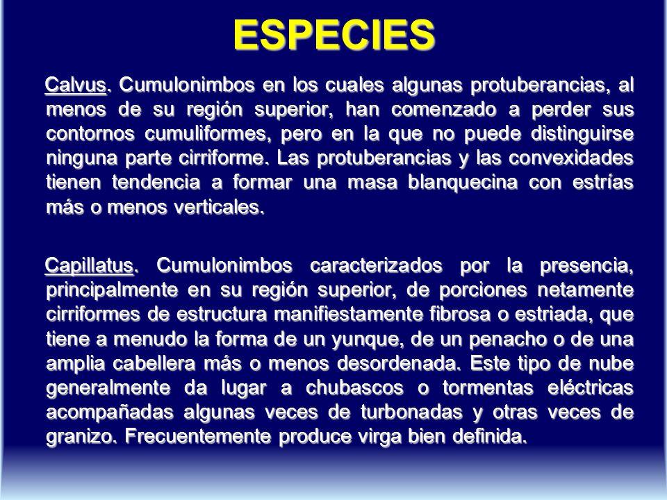 ESPECIES Calvus.