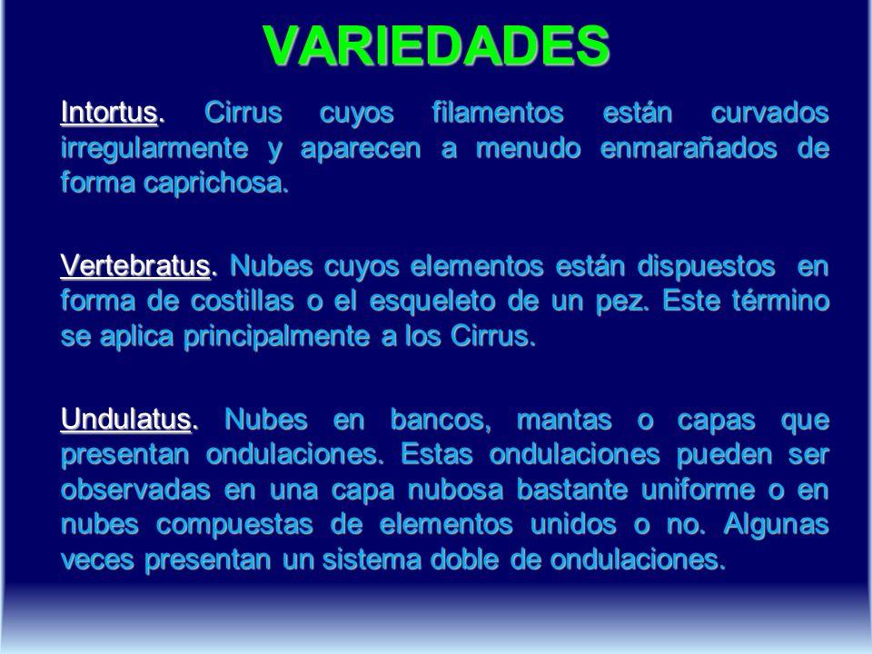 VARIEDADES Intortus. Cirrus cuyos filamentos están curvados irregularmente y aparecen a menudo enmarañados de forma caprichosa. Vertebratus. Nubes cuy