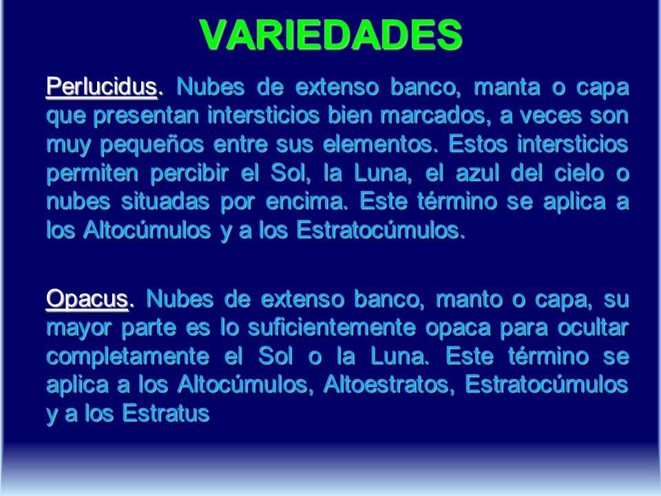 VARIEDADES Perlucidus.