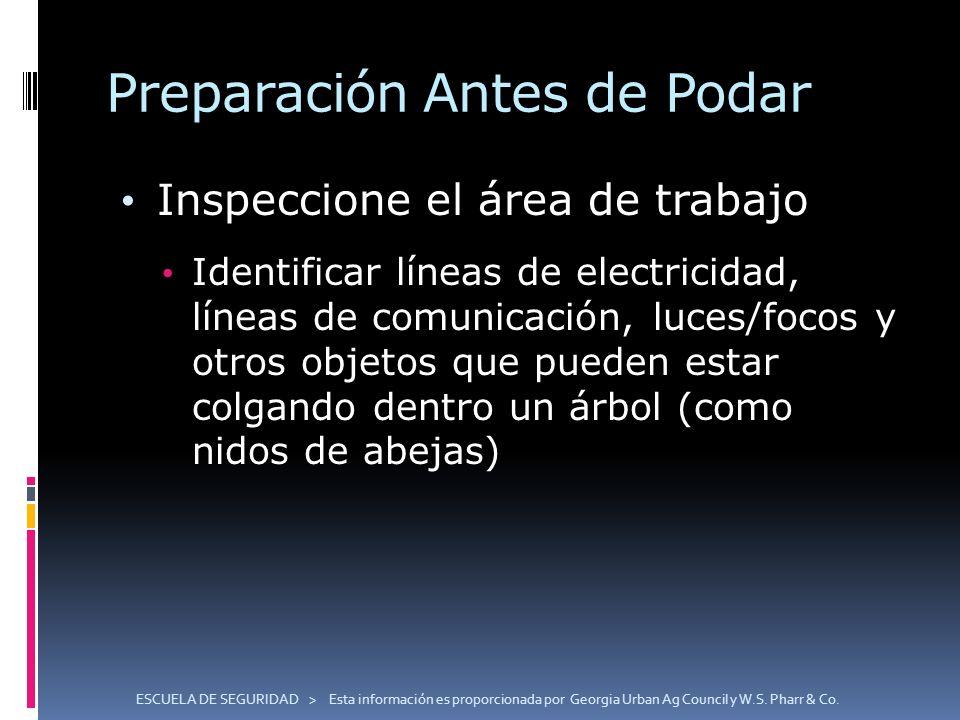 Preparación Antes de Podar Inspeccione el área de trabajo Identificar líneas de electricidad, líneas de comunicación, luces/focos y otros objetos que