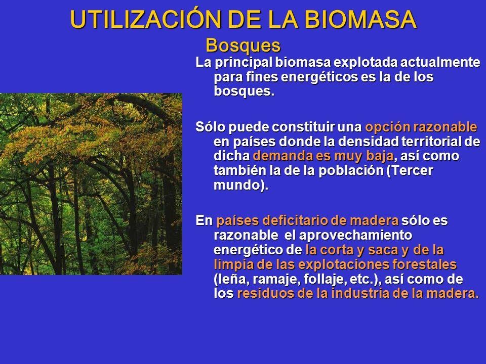 UTILIZACIÓN DE LA BIOMASA Bosques La principal biomasa explotada actualmente para fines energéticos es la de los bosques. Sólo puede constituir una op
