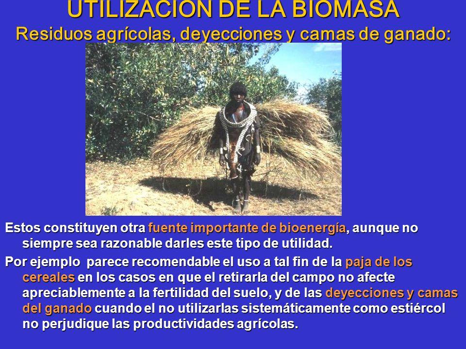 UTILIZACIÓN DE LA BIOMASA Residuos agrícolas, deyecciones y camas de ganado: Estos constituyen otra fuente importante de bioenergía, aunque no siempre