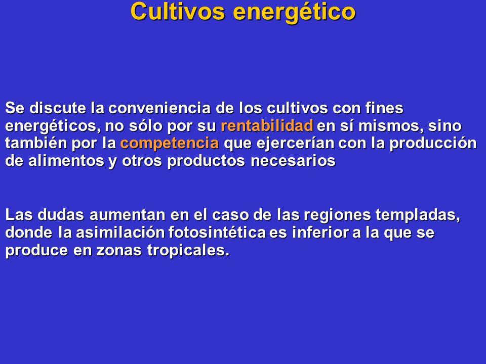 Cultivos energético Se discute la conveniencia de los cultivos con fines energéticos, no sólo por su rentabilidad en sí mismos, sino también por la co